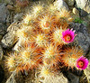 Blooming Desert 2010 : Early Spring 2010, in Arizona and Southern California, including Joshua Tree National Park, on an early Team Whooz road trip.  Uncaptioned, all taken with Kodak Z1015 IS camera.